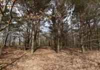 Działka leśna na Mazurach